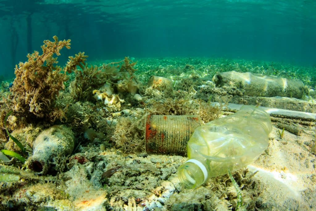 Plasticos en mar y tierra
