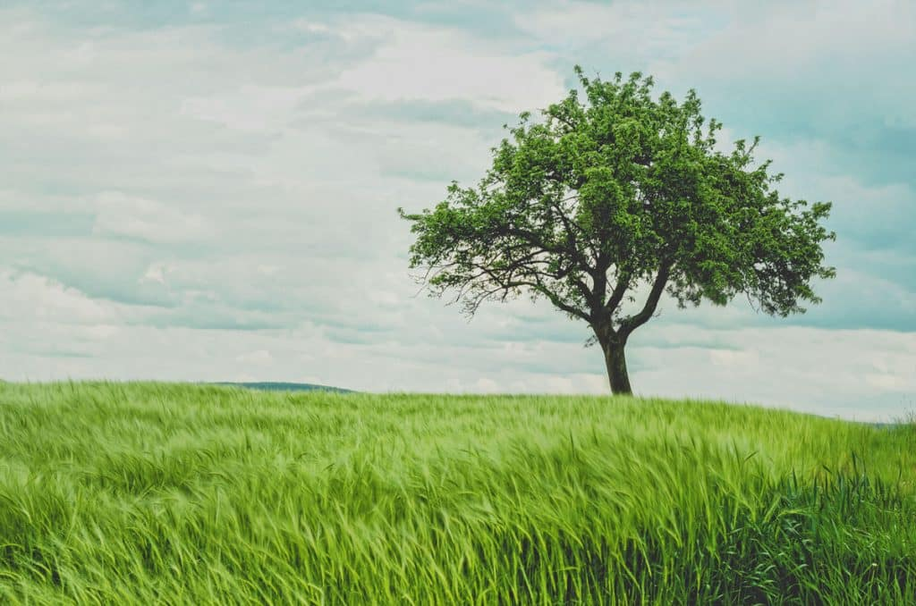 Plantar arboles Ecosia