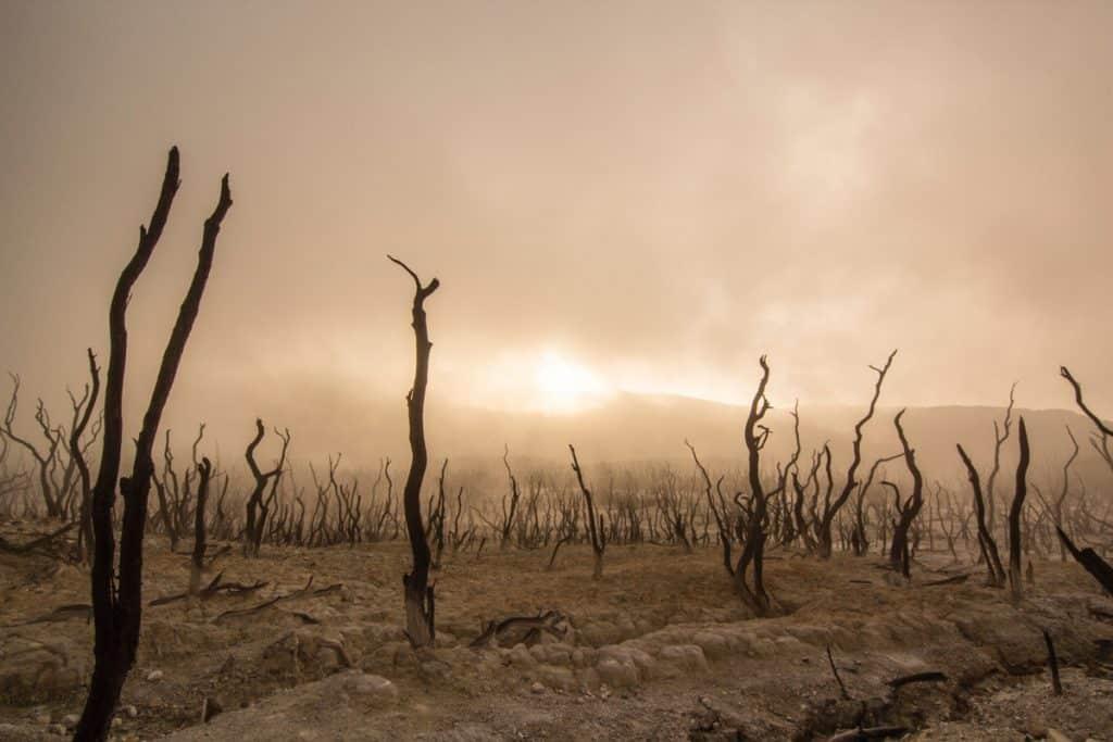 desertificacion reforestacion